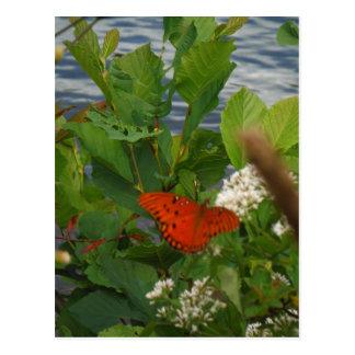 Orange und schwarzer Schmetterling in dem See Postkarte