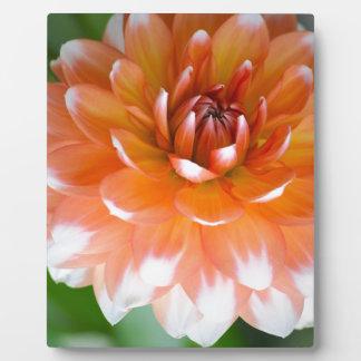 Orange und weißer Ruhm Fotoplatte