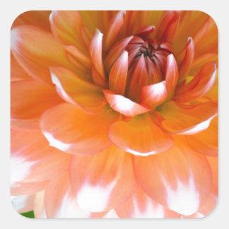 Orange und weißer Ruhm Quadratischer Aufkleber