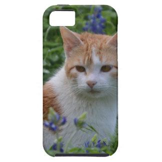 Orange und weißer Tabby iPhone 5 Cover