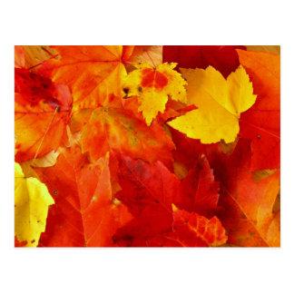Orange verlässt Neu-England Laub-Postkarte Postkarte