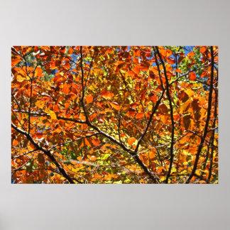 Orange Zerstampfungs-Herbst-Blätter Poster