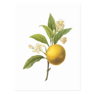 Orange (Zitrusfrucht-SP.) durch Redouté Postkarte