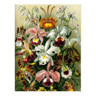 Orchidae Postkarte