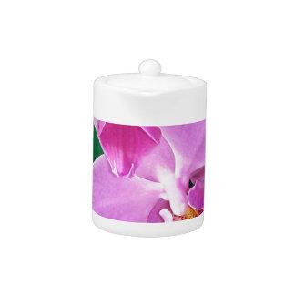 Orchidee blüht Nahaufnahme im Rosa