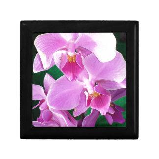 Orchidee blüht Nahaufnahme im Rosa Erinnerungskiste