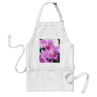 Orchidee blüht Nahaufnahme im Rosa Schürze