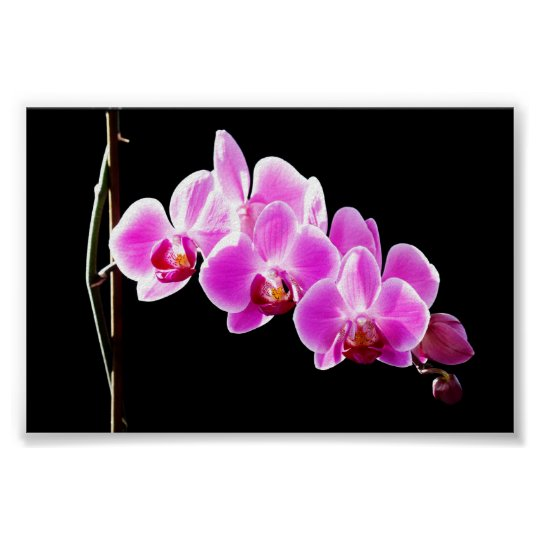 Orchidee, Poster