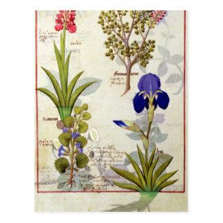 Orchidee u. Fumitory oder Herz-Hedera u. Iris Postkarte
