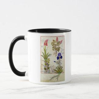 Orchidee u. Fumitory oder Herz-Hedera u. Iris Tasse