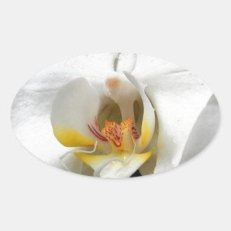 Orchideen-Blume Ovaler Aufkleber