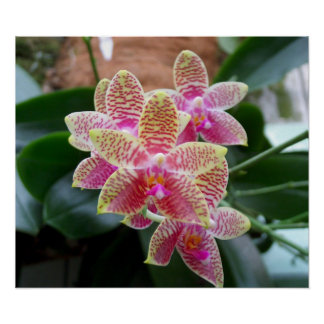 Orchideen-Druck Poster
