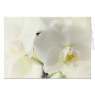 Orchideen Grußkarte