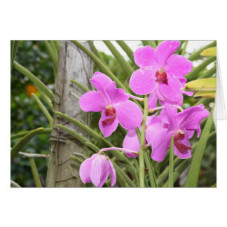 Orchideen Karte