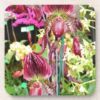 Orchideen-Liebe Untersetzer
