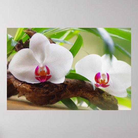 Orchideen Wellness Oase Poster