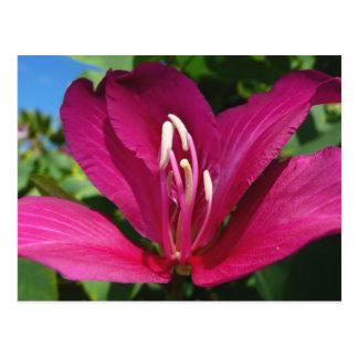 Orchideenbaum-Blüte Postkarte