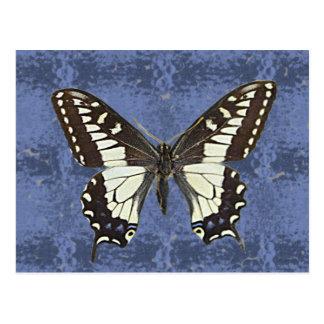 Oregon-Frack-Schmetterling Postkarte