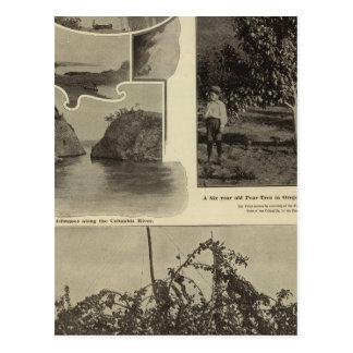 Oregon, in dem jede Aussicht gefällt Postkarte