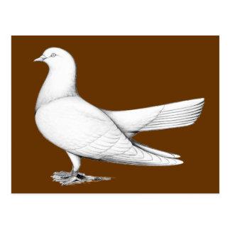 Orientalische Rolle:  Fliegen-Art Postkarten