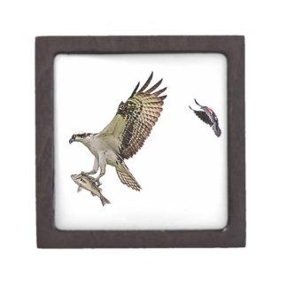Osprey, der durch eine rotgeflügelte Amsel gejagt Kiste