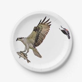 Osprey, der durch eine rotgeflügelte Amsel gejagt Pappteller