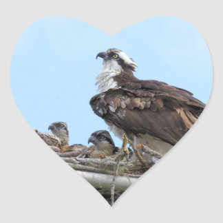 Osprey-Falkemutter und Babys Aufkleber