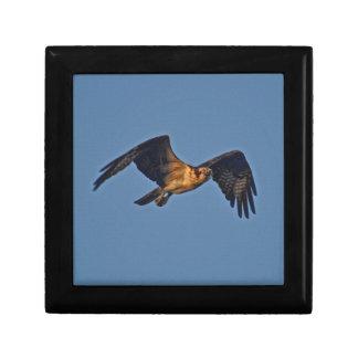 Osprey-Fische Eagle, das am Sonnenuntergang fliegt Erinnerungskiste