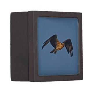 Osprey-Fische Eagle, das am Sonnenuntergang fliegt Kiste