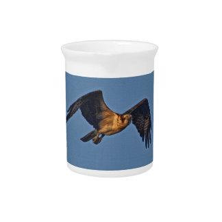 Osprey-Fische Eagle, das am Sonnenuntergang fliegt Krug