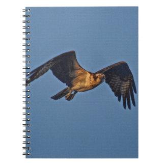 Osprey-Fische Eagle, das am Sonnenuntergang fliegt Spiral Notizblock