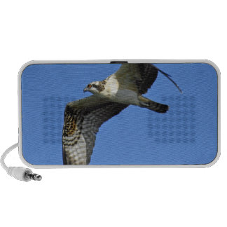 Osprey-Fliegen-Lautsprecher