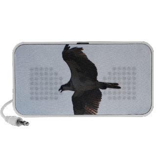 Osprey-Flug-Lautsprecher