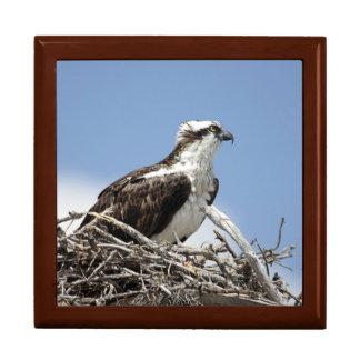 Osprey Geschenkbox