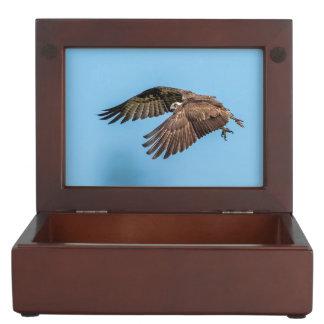 Osprey im Flug am Flitterwochen-Insel-Staats-Park Erinnerungsdose