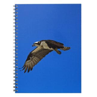 Osprey im Flug II Notizblock