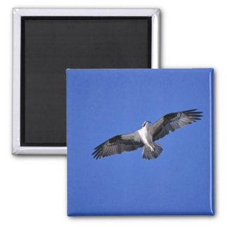 Osprey im Flug Kühlschrankmagnet