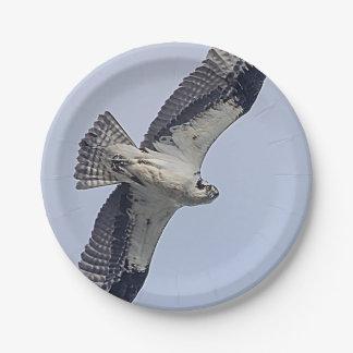 Osprey im Flug Pappteller