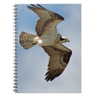 Osprey im Flug Spiral Notizblock