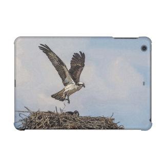 Osprey in einem Nest