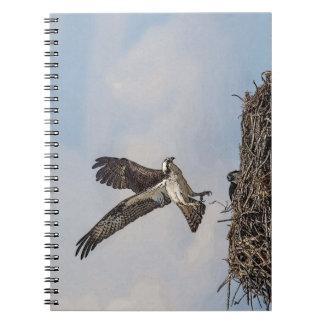 Osprey in einem Nest Notizblock