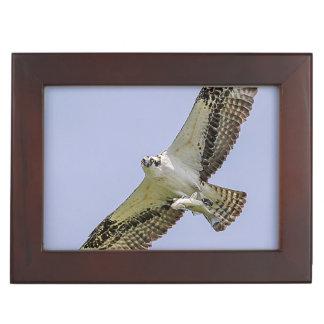 Osprey mit einem Fisch Erinnerungsdose