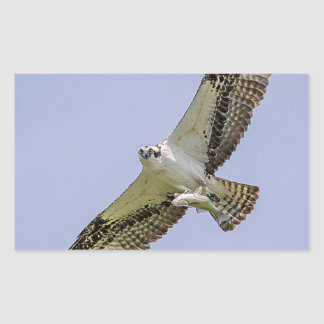 Osprey mit einem Fisch Rechteckiger Aufkleber