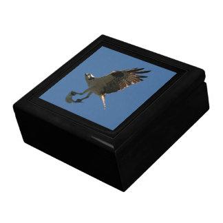 Osprey-Raubvogel-Vogel-Tier-Tier-Sumpfgebiete Schmuckschachtel