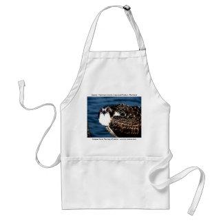 Osprey, Tilghman Insel, Hartriegel-Hafen, Maryland Schürze