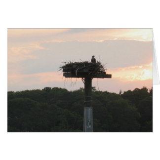 Osprey-Verschachtelung Grußkarte