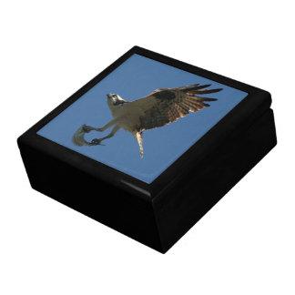 Osprey-Vogel-Tiertier-Fisch-Geschenkboxen Erinnerungskiste