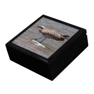 Osprey-Vogel-Tiertier-Fisch-SeeGeschenkboxen Erinnerungskiste