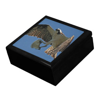 Osprey-Vogel-Tiertier-Fisch-SeeGeschenkboxen Schmuckschachtel
