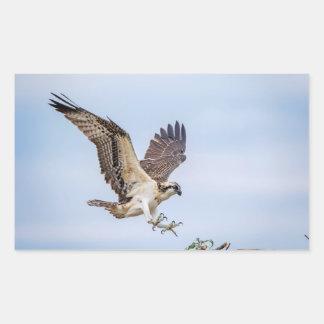 Ospreylandung im Nest Rechteckiger Aufkleber